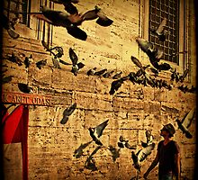 Grounded Pigeon by Andrew Paranavitana