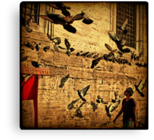 Grounded Pigeon Canvas Print