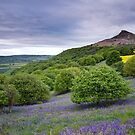 Bluebells at Roseberry Topping by MartinWilliams