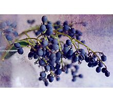 Berries in Blue Photographic Print