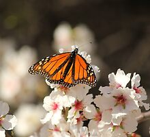 Spring Is Coming by Amy Dee