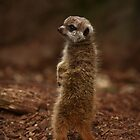 Baby Meerkat: Scout II by Daniela Pintimalli