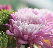 Chrysanthemums by Susie Peek