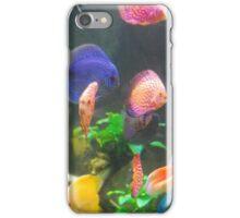 fish colors  iPhone Case/Skin