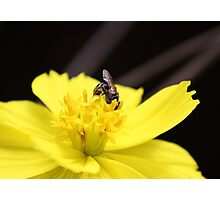 Fly on a flower Photographic Print