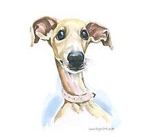 Greyhound puppy Photographic Print