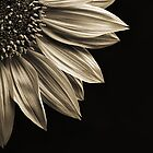 Sunflower by Scott Carr