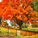 Fall on Cemetery Road by Nadya Johnson