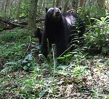 MOMA BEAR by WINTERROSE