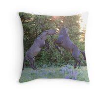 Two Pryor Mountain Stallions Fight in the Morning Sun Throw Pillow