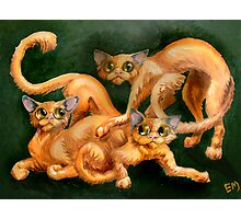 three cats Photographic Print