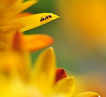 A yellow summer 2 by arybus