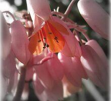 In A Garden Somewhere... by Vanessa Barklay