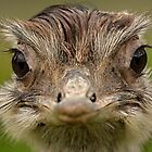 How many times do I have to tell you, Im not an Ostrich! by Mark Hughes