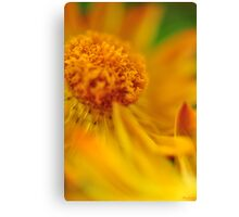 A yellow summer 3 Canvas Print
