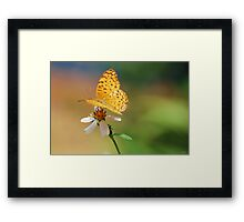 A leopard, a coat button and a whole palette of colours Framed Print