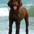 Irish water spaniel by LorrieBee