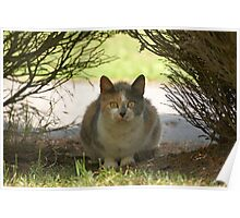 Cat watching Poster