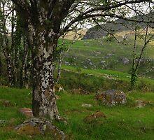 Tree Green Hills by Karin  Funke