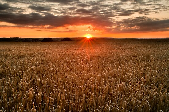 Field of Gold by AndyCosway