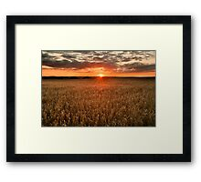 Field of Gold Framed Print