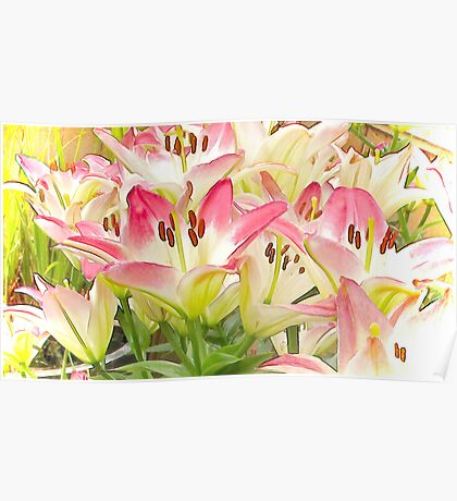 The Lily Patch Poster
