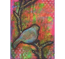 Bird In Tree Photographic Print
