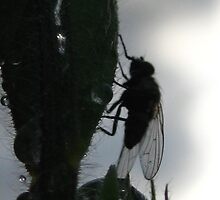 I see a silhouette of a fly by millymuso