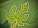 New leaf by Yelena Rozov