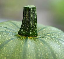 Courgette - Zucchini by vbk70