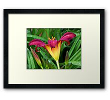 A Pretty Lily!!! © Framed Print