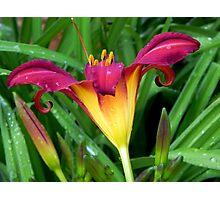 A Pretty Lily!!! © Photographic Print
