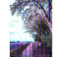 Evening Walk Photographic Print