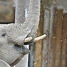 Momma Elephant by Robert  Miner