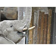 Momma Elephant Photographic Print