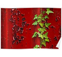 Peeling Ivy Poster