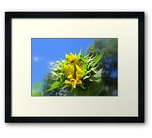 Slowly I Open... One Petal At A Time... Framed Print