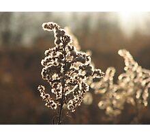 Silver Shine Photographic Print