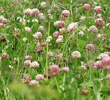 Sea of Clover by Kathi Arnell