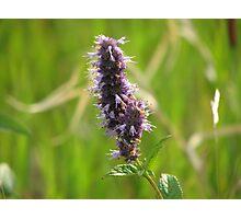 Purple Spike Photographic Print