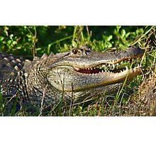 Florida gator Photographic Print