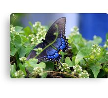 Wings of blue  Canvas Print