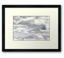 Arctic Fox #2, on the Tundra, Hudson Bay, Canada  Framed Print