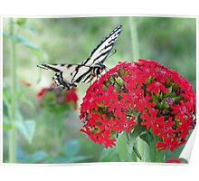 Tiger Swallowtail on Crimson Cross Poster