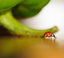 Ladybug walking her path... by Christine Kapler