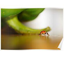 Ladybug walking her path... Poster