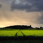 Field by Hurcott Woods, Worcestershire, England by Alex Drozd