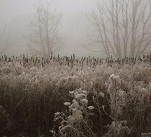 Reeds, Puxton Marsh, Kidderminster by Alex Drozd