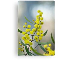Sword Wattle Canvas Print