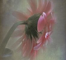 Gerbera in a Vase by Karen Martin